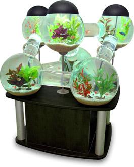 Silverfish Aquarium – Spoil Your Fish - Gadizmo.com