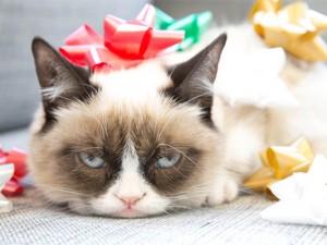 Grumpy-Cat-Humbug