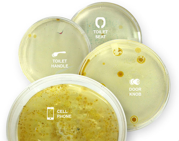 cellphone-bacteria