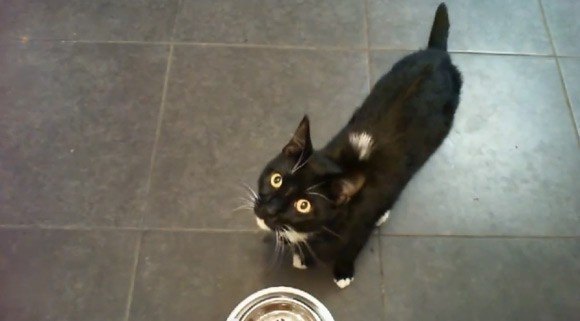 Uknekt-Petfeeder-Cat