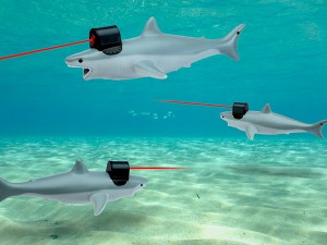 f2eb_shark_w_frickin_laser_pointer_water