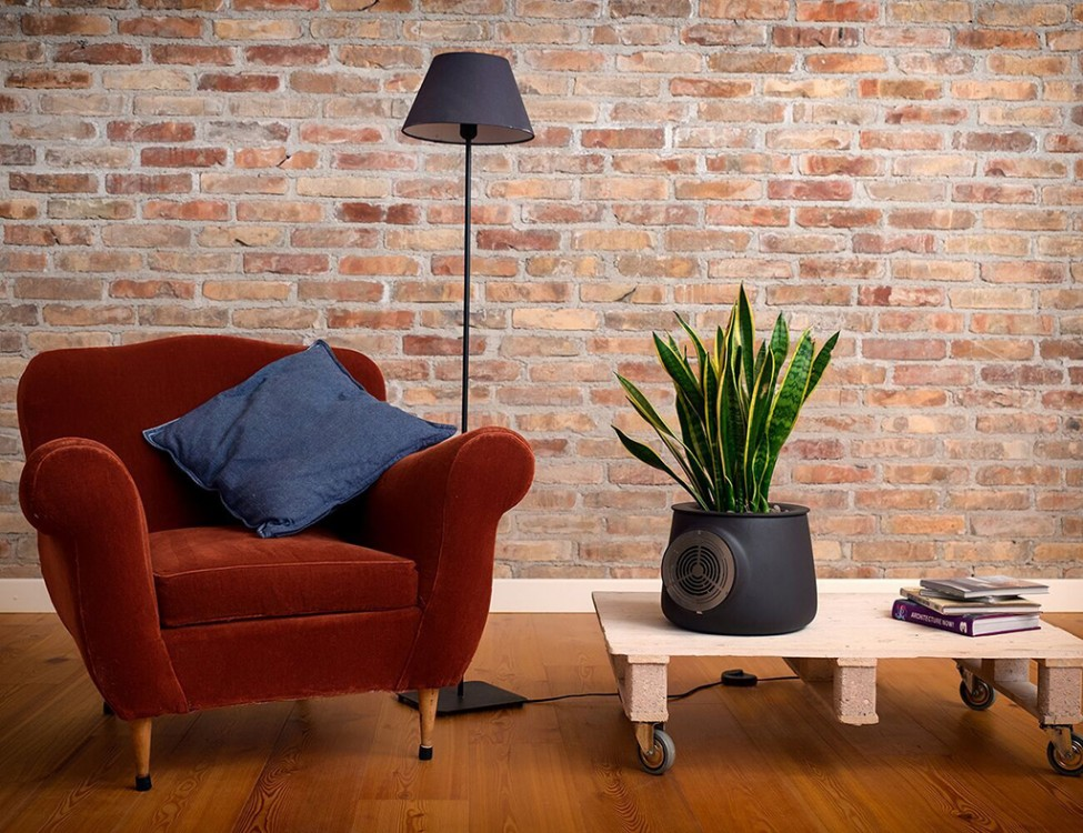 clairy-natural-air-purifier-living-room