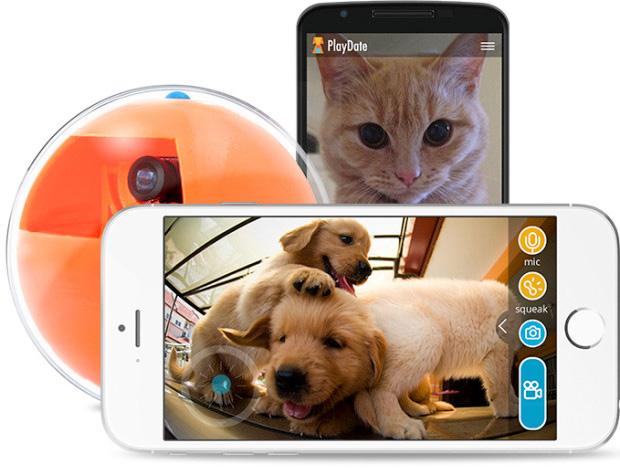 playdate-smart-pet-toy